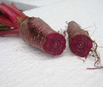 Baby Choggia Beetroot