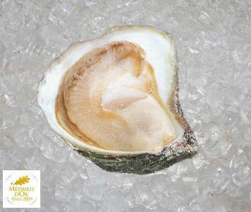 Flat Oyster - Belon