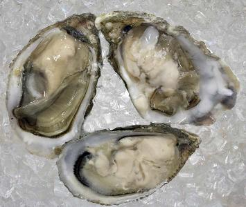 Harty Oyster