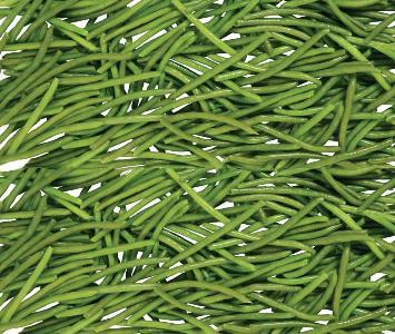 Kenya Beans