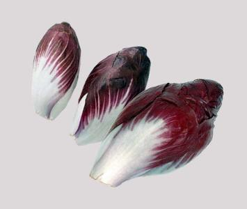 Red Endive / Chicory