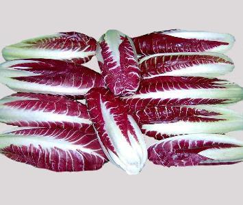 Red Lettuce / Radaccio