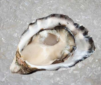 Smoky Bay Oyster