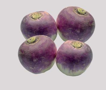 Turnip - Round